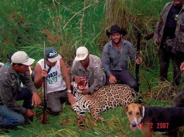The poachers with a killed jaguar. Credit: CEN/@MPF_AC