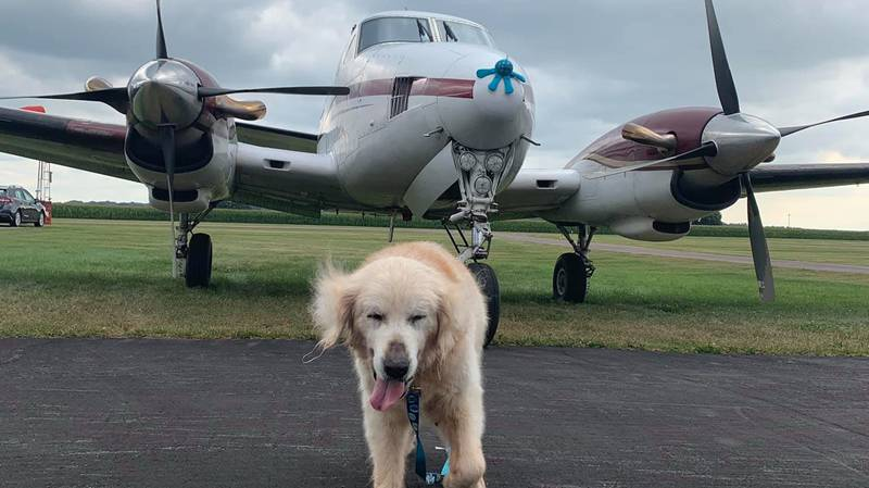 Golden Retriever With Terminal Cancer Living His Best Life As He Ticks Off Bucket List