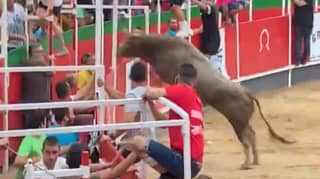 ​Bull Leaps Into Crowd At Spanish Event Before Being Shot Dead