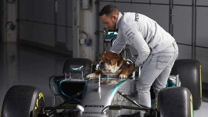 Lewis Hamilton Says His Bulldog Roscoe Is Now 'Fully Vegan'