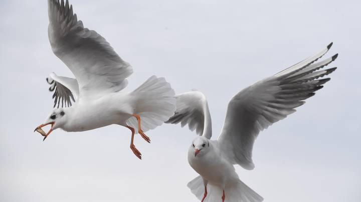 Man Fined More Than £1,000 After Killing Seagull That Tried To Steal His Lunch