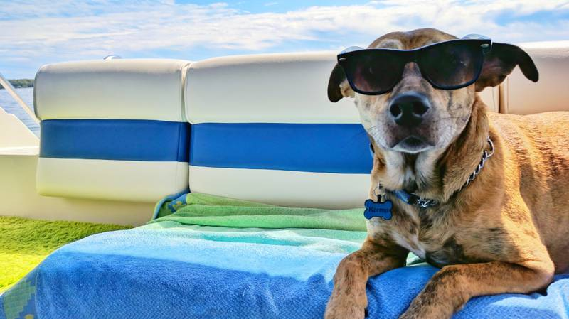 How To Keep Your Pets Cool During This Weekend's Heatwave