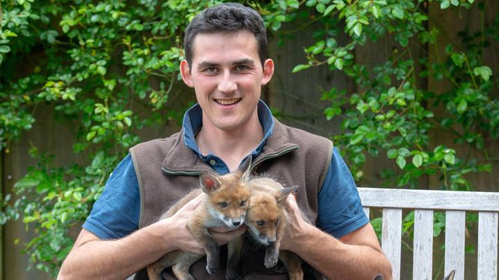 Farmer Saves Four Fox Cubs By Performing Emergency C-Section On Dead Mum