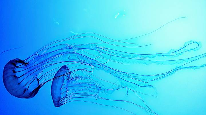 More Spanish Beaches Close After Deadly Jellyfish Invasion Continues To Wreak Havoc