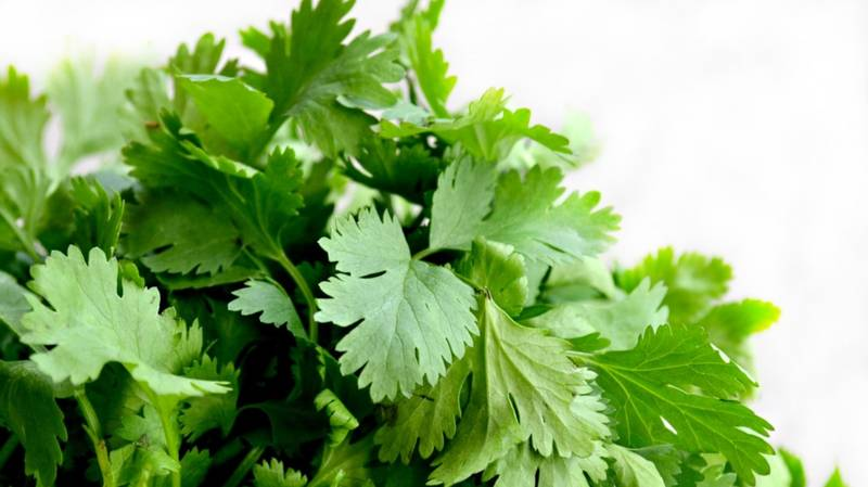 Today Is International 'I Hate Coriander' Day