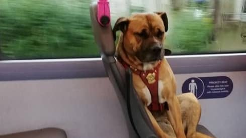 Owners Haven't Picked Up Dog Found Riding Bus Alone
