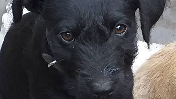 Woman Calls For Action After Puppy Dies 'From Fright Caused By Fireworks'