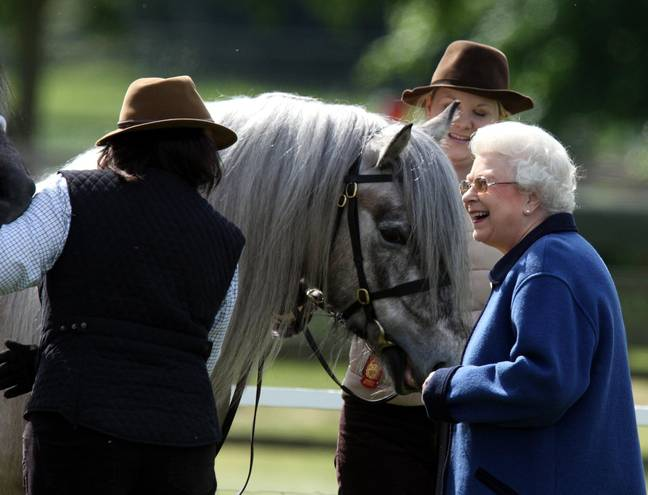 The Queen famously loves her horses and you could help look after them. Credit: PA