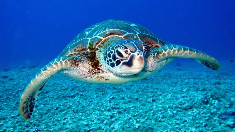 Luxury Hotel In The Maldives Is Hiring Someone To Look After Its Turtles