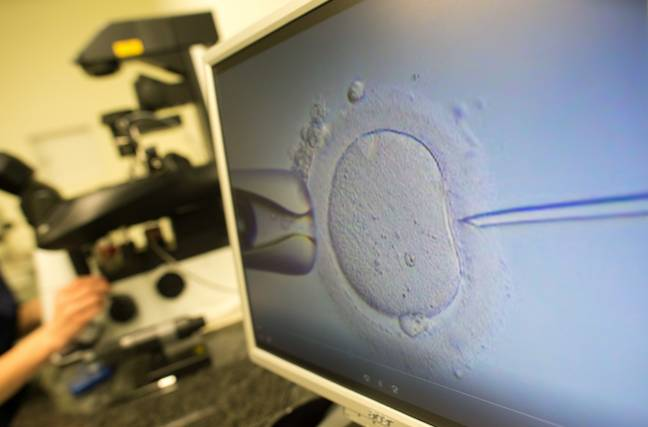 An egg cell being injected with sperm. Credit: PA