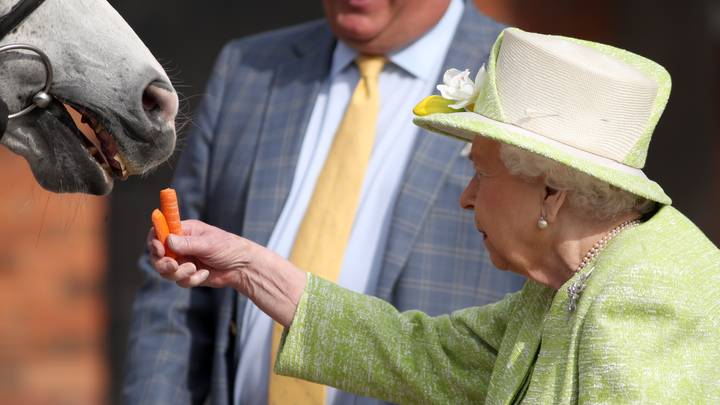 The Queen Is Looking For Someone To Help Look After Her Horses